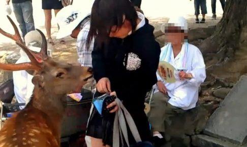 奈良公園で鹿にスカートをめくられる中学生